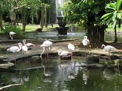 mini-bali-bird-park1