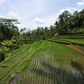 Indie Trips that Include Bali